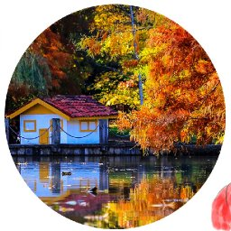How to paint Fall tree on a lake with Cabin Live streaming tutorial | TheArtSherpa