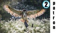 Bird in Flight Part 2 Patron Live stream   TheArtSherpa