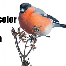 Live streaming watercolor class Funny Fall Bird on Twig | TheArtSherpa