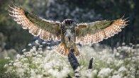 Patron Bird in Flight Part 3