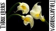 Easy acrylic tutorial | Modern Calla Lilies | Step by Step  | TheArtSherpa