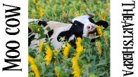Funny Cow in Sunflowers Step by step Acrylic Painting tutorial | TheArtSherpa