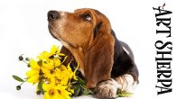 BASSET HOUND  BAQ Beginners Learn to paint Acrylic Tutorial Step by Step