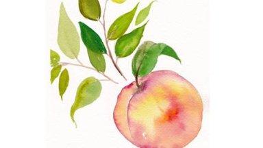 Simple Peach  in Watercolor
