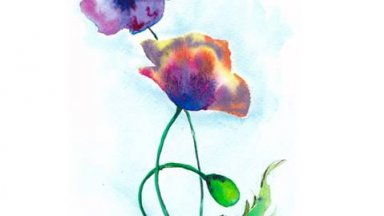 Simple colorful poppies in watercolor
