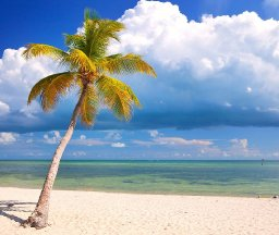 How to paint a realistic Palm tree on the Beach