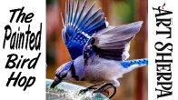 BLUE JAY BIRD BATH | Beginners Acrylic Tutorial Step by Step | The Painted Bird Hop