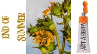 How to paint with Acrylic on Canvas wilting Sunflower