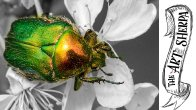 How to paint Metallic effects Beetle painting tutorial for beginners step by step