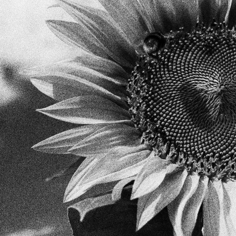 Black white 6.jpg