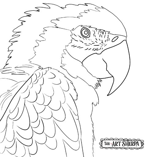 parrot trace #10