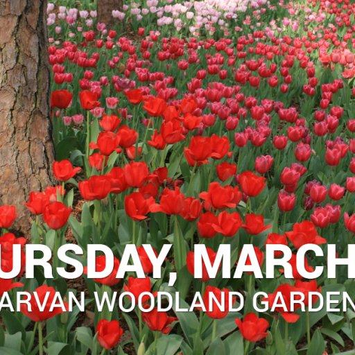 WEB - Garvan Mar 19-01