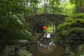 Garvan Gardens - Full Moon Bridge.jpg