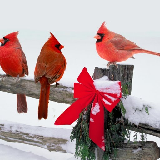 Snowbirds Thumb