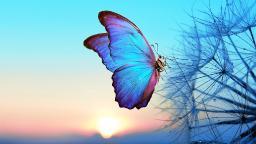 thumbnail  TAS210116.01 Butterfly Sky.jpg