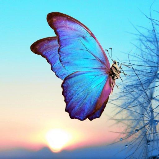 thumbnail  TAS210116.01 Butterfly Sky
