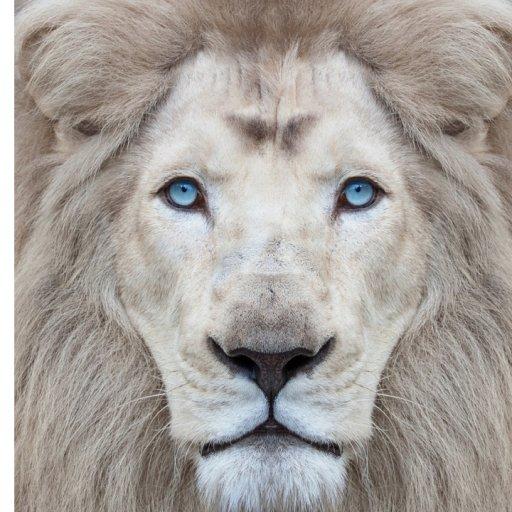 thumbnail  aslan