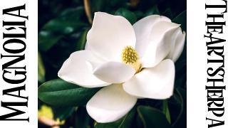 thumbnail  2 magnolia .jpg