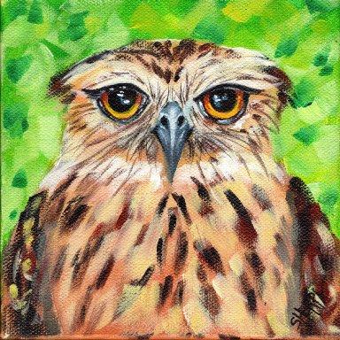 #9  Bird Hop 8x8 Print. Grumpy  Owl by The Art Sherpa