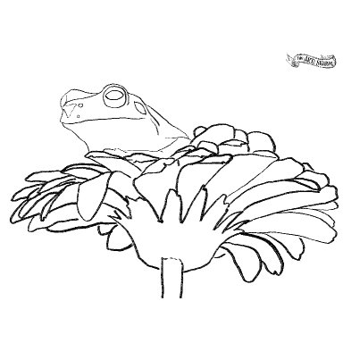 frog traceable .jpg