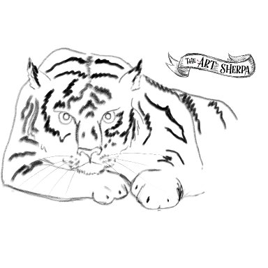 Tiger watercolor traceable
