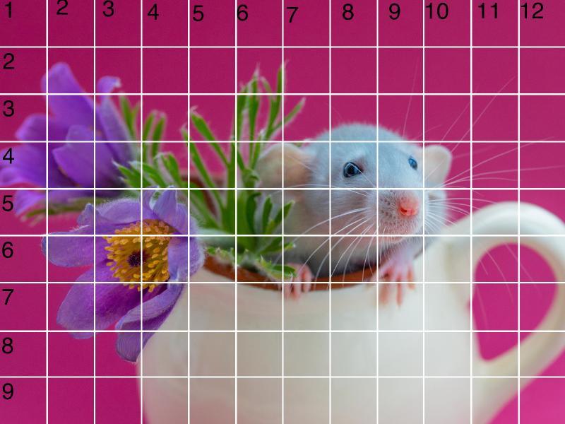 RAT GRID 9X12 .jpg