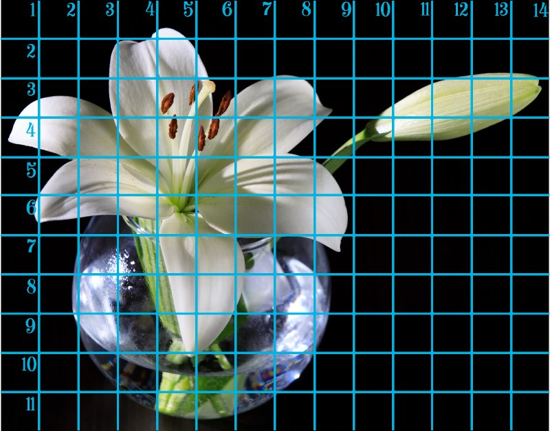 11x14 horizontal 1 day lily .jpg