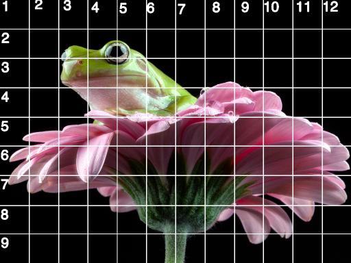 GRID 9X12 HORIZINTAL frog .jpg