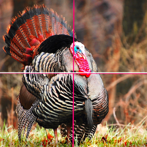 turkey reference 2.jpeg