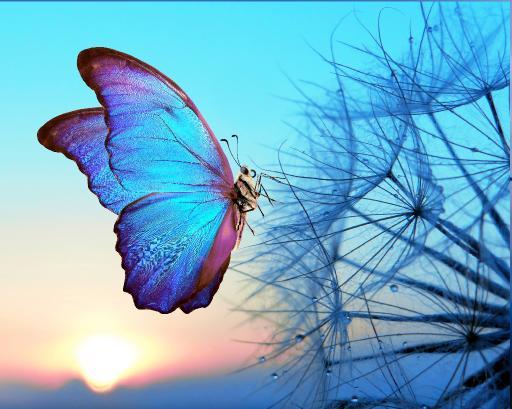 16x20 butterfly .jpg