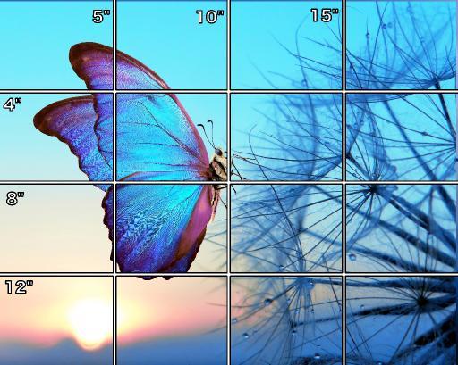 16x20 butterfly  simple Grid .jpg