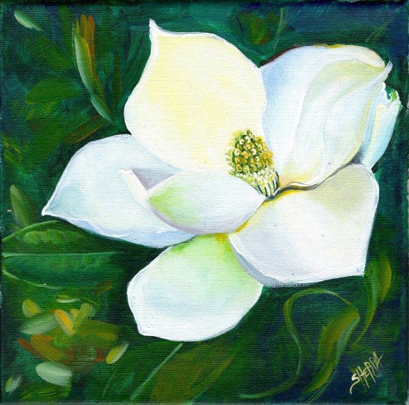 white magnolia flower .jpg
