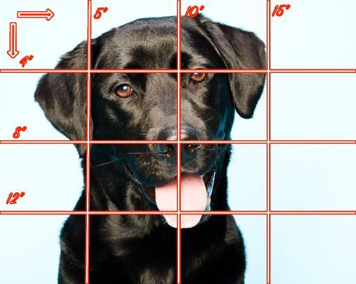 16x20 grid Horizontal black lab .jpg