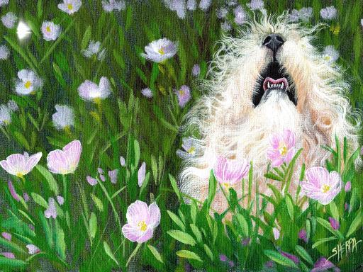 white fluffy dog painting .jpg