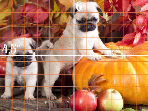 9x12 grid simple pugs .jpg