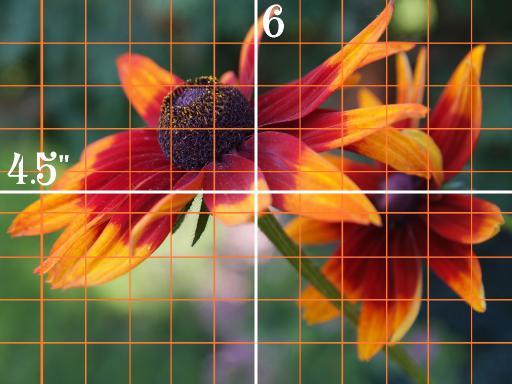 9x12 grid simple daisy .jpg