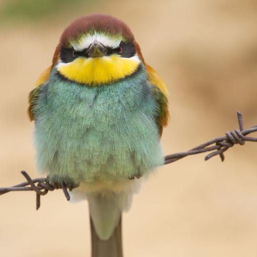 Bird hop Model 8.jpg