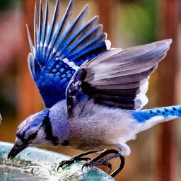 Bird hop Model 4.jpg