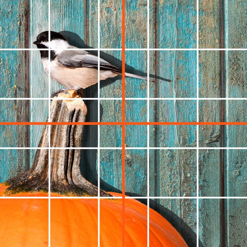 10x10 grid chickadee pumpkin  copy.jpg