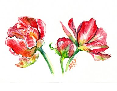 How to watercolor Tulips in a Botanical Style step by step