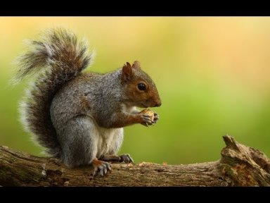 How To Paint Acrylic On Canvas Fall Squirrel Beginners