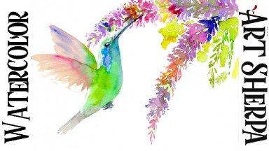 Humming Bird Easy How to Paint Watercolor Step by step   The Art Sherpa