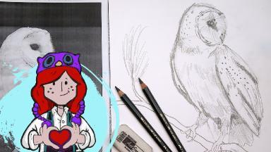 Beginner How To Draw Barn Owl Tutorial The Art Sherpa